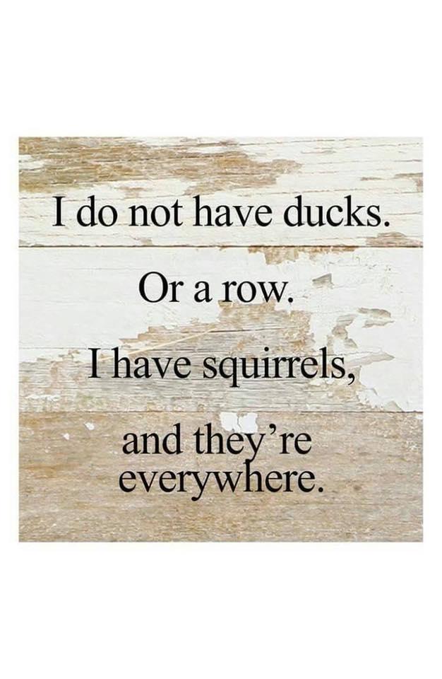 Ducks 3